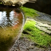 コロナによる浄化作用、クリーンになる海外投資
