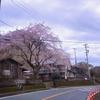 桜Bike Ride - 2020/03/28
