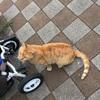 【地域猫】Vol.11 おひさしぶりのコトラちゃん♪