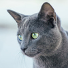人間味が失われた日本にハグをしてくれるのは、猫。