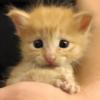 生後間もない子猫を保護、先輩猫たちは驚くほど優しく子猫を受け入れた