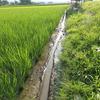 溝切り・への字の農薬使用量 慣行栽培への疑問