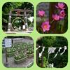 奥武蔵への小さな旅