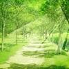 【体験レポ②】ヨガと瞑想で「今、ここ」に ~マインドフルネスストレス低減法MBSR研修セッション体験記②~