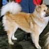 【お知らせ】『地震前兆百科』に「ペット」と「イヌ」のページを新設