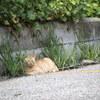 PENTAX Qで猫撮り