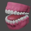 「身体のモデリング」その68 ~歯⑪~。【Blender #419】