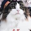 【観光】芦ノ牧温泉駅のねこ駅長さん達のプロフィールをご紹介します。