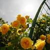 花菜ガーデンに行ってきた