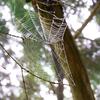 クモが好き クモの巣・クモの網もいろんな形がある