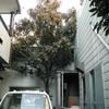 植木切断2(ビワの木の施工例)
