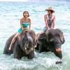 象さんと海水浴/エレファントスイムに行こう!
