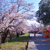 桜まつりに行ってきた件について カメラと散歩