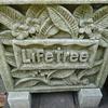 オーガニックコットンの「ライフツリー(Lifetree)」に行ってきた
