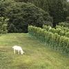 ワインにとっての自然って?〜栽培について
