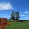 美瑛町 真夏の「家族の木」