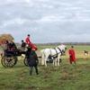 100年超のデンマーク伝統馬イベント