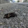 ホシホウジャクの死