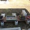 冬に備えた盆栽棚の準備