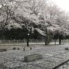 【本庄ハーフマラソン】雨、桜、再会