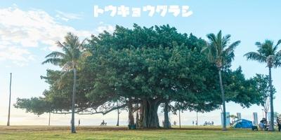 【月刊 東京ぐらし】vol.11 拝啓 ハワイさま。あれから、1ヶ月。