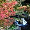 徳川園の紅葉はまだちょっと早かった