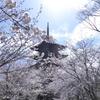 【東寺】不二桜と五重塔の夢競演!仏像の見どころや立体曼荼羅も徹底解説!