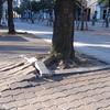 今更、樹木について悩む。根がコンクリートや配管に影響を及ぼす??