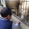 五月山動物園に行ったよ