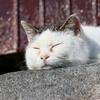 【田代島(猫島)=宮城県石巻市】猫好きの、猫好きによる、猫好きのための楽園!