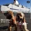 【わんこと旅】 北海道へ!Story.4 (2日目:来たぜ!北海道!!最北端に行くのだっ!)