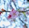 夢と春と妖精たち