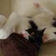 今日の黒猫モモ&白黒猫ナナの動画ー764