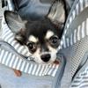 はじめての犬との旅行!注意することや準備するものは?
