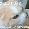 にゃんにゃんにゃんで 自由きままにゃ お猫さまの日