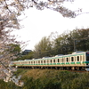 ソメイヨシノをバックに走る成田線E231系