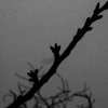OLYMPUSのコンデジ 「XZ-10」で2017年3月19日までに撮影した写真を紹介します。ソメイヨシノの開花はあと少しです