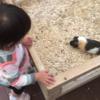 井の頭自然文化園 1歳児はモルモットとのふれあい、ミニ遊園地がおススメ