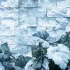 【私もです】就職氷河期世代の支援や人生再設計は上手くいくのか?