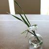 みずのうつわ|小さな野の花を生ける吹きガラスの花瓶