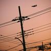 今日の一枚「電柱と輸送機」(2021.05.06)