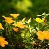 図鑑といえば北隆館「原色牧野日本植物図鑑」・・・キョウチクトウは気をつけよう!