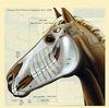 ハミと手綱で駿馬を調御する:瞑想実践の科学9