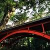 おとなの自然観察~等々力渓谷~アクセスとゴルフ橋からの散策レビュー(前篇)~