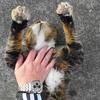 11月後半の #ねこ #cat #猫 その2