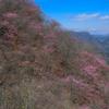 西上州 アカヤシオに染まる三ツ岩岳