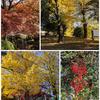 栃木への旅(秋の那須烏山市)