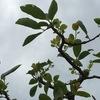 秋まきの種イモが腐らない対策 & これまで栽培したジャガイモの品種