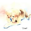 愛犬の水彩イラストを描かせて頂きました!