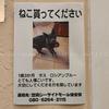 迷い猫「貰ってください」になりました。┃笠岡シーサイドモール